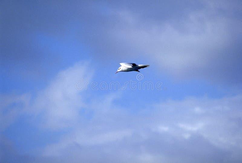 Download Sea-gull stock image. Image of mountain, solitude, landscape - 245417