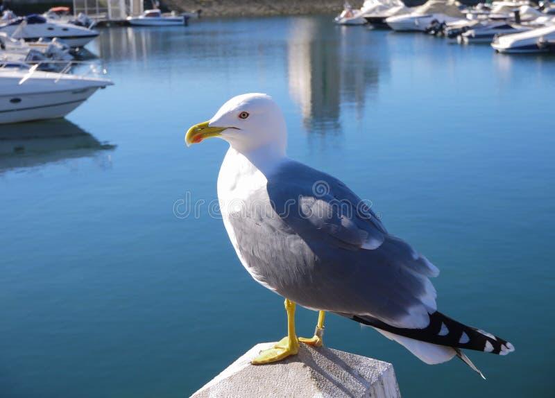 Download Sea Gull Stock Photo - Image: 27779310