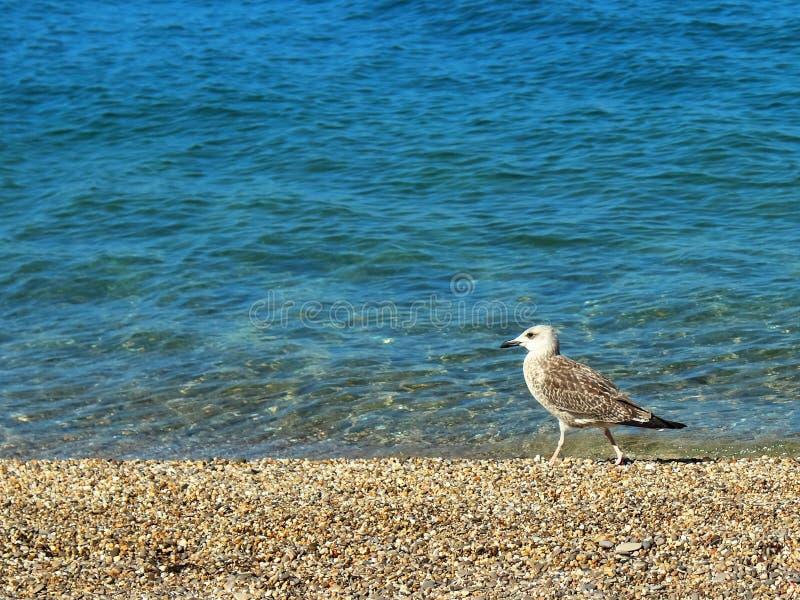 Sea gull on the beach texture stock image