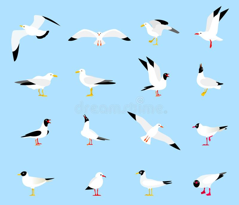 Sea Gull, a beautiful bird. Cute bird in cartoon style. Floating, standing and flying birds in a flat style. Seagulls in a flat style vector illustration
