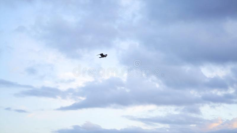 Sea gull flying away on cloudy, blue sky background, freedom concept. Stock. Beautiful gull bird soaring through the stock images