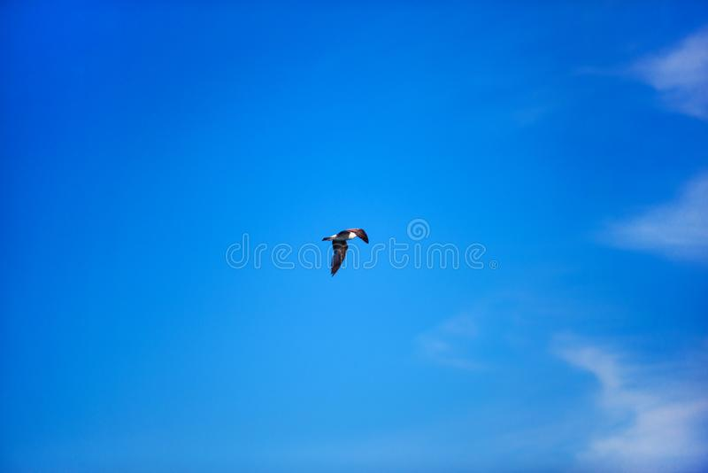 Sea gull flying in the blue sunny sky over the coast of Black Sea stock images