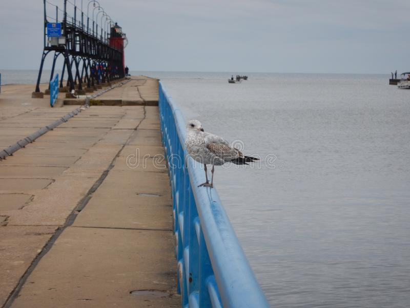 Sea gull at the lighthouse royalty free stock image