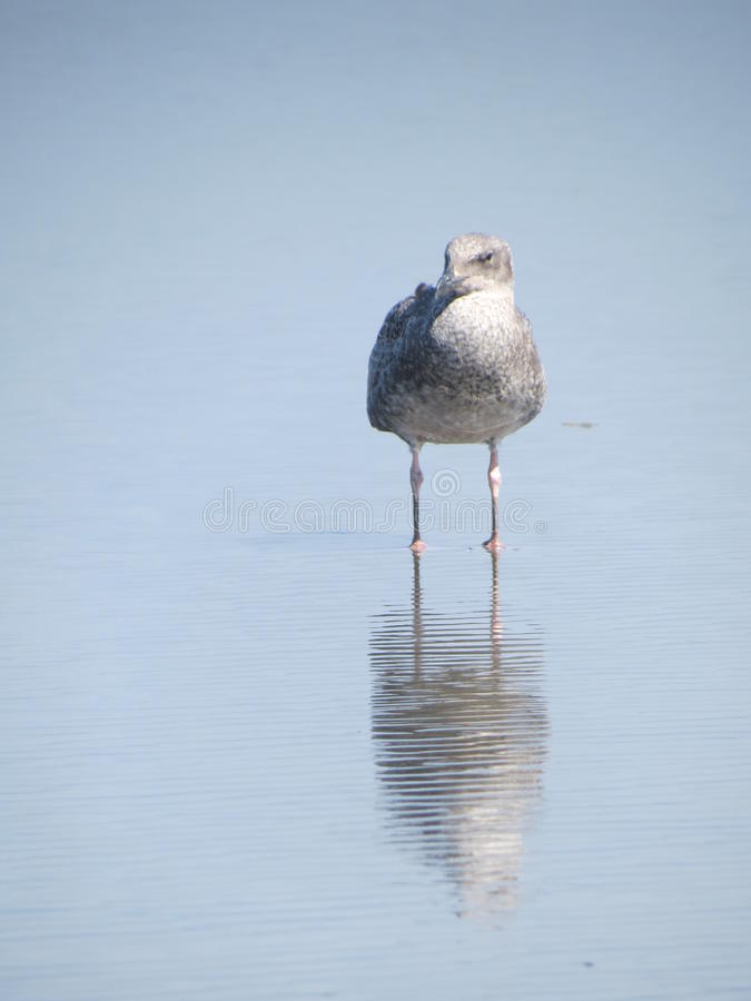 Sea Gull Moment stock images