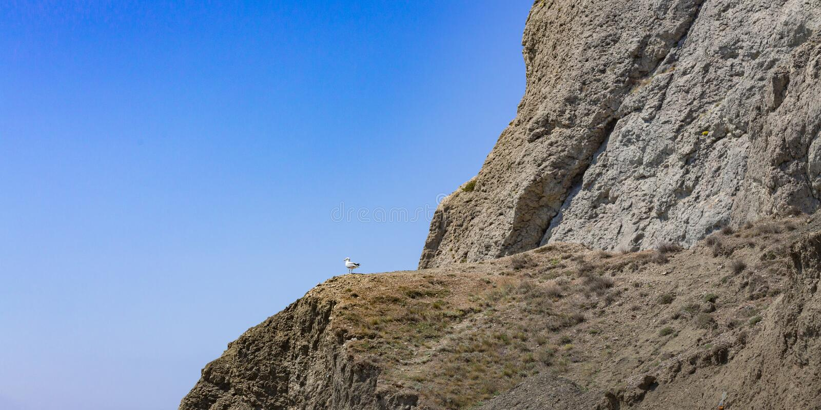 A sea-gull sitting at the edge of the cliff. A seagull sits on a cliff and looks towards the sky. Wildlife scenery of solitude, calmness and tranquility royalty free stock images