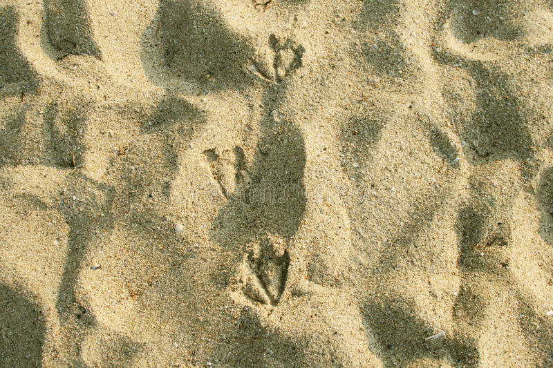 Download Sea gulls stock photo. Image of foot, water, signs, dune - 25872384