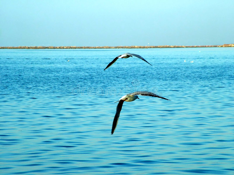 Download Sea Gulls stock image. Image of gull, gulls, seagull, campetition - 36993