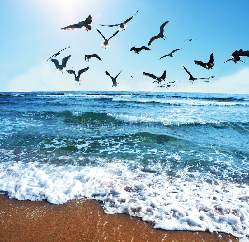 Download Sea gulls stock photo. Image of soar, water, ocean, heaven - 4781548