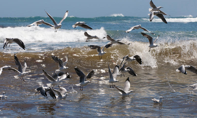 Download Living Seas With Gulls Royalty Free Stock Photo - Image: 29794595