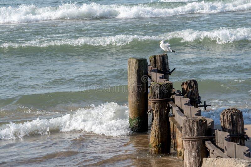 Sea gulls on lake Michigan stock photography