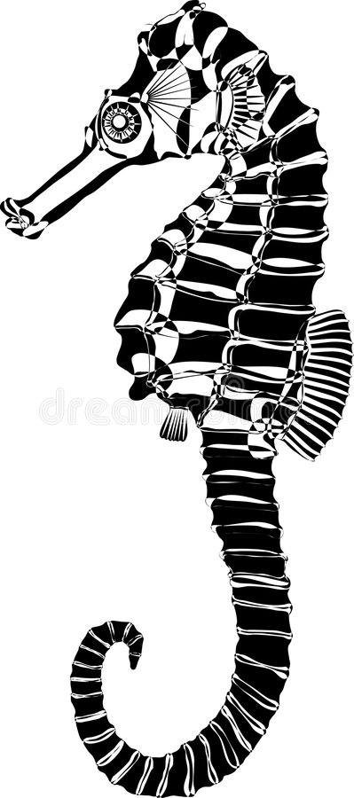Sea horse. Drawing of an adult Sea horse. Vector royalty free illustration