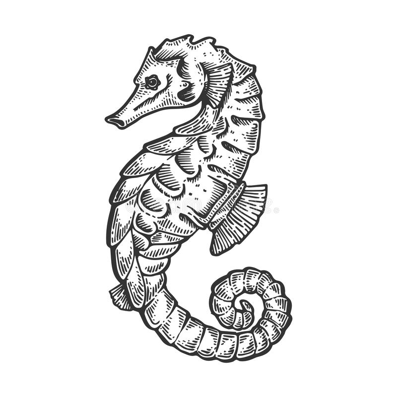 Sea horse animal engraving vector illustration. Scratch board style imitation. Black and white hand drawn image stock illustration