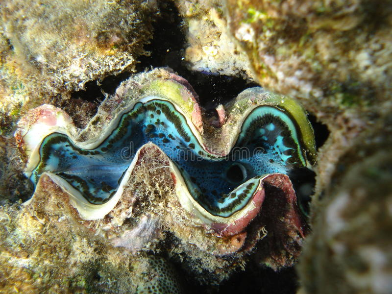 Download Sea inhabitants stock image. Image of ocean, nature, under - 15543977