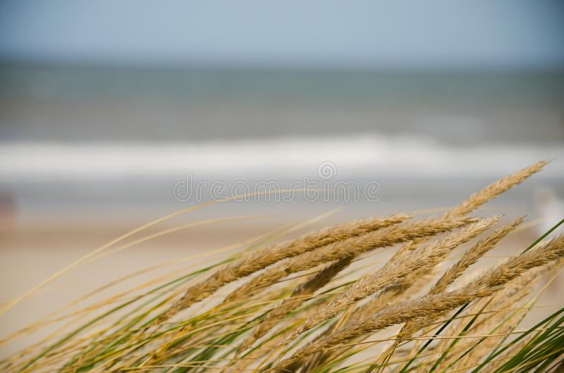 Spotlight plants and sea landscape. A defocused sea with plants in foreground on a sunny holidays stock photography