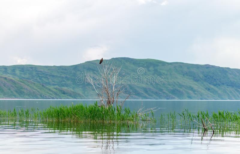 Sea landscape with mountines and canes, blue sky with clouds, cloudly without sun, kazakhstan.  royalty free stock photos