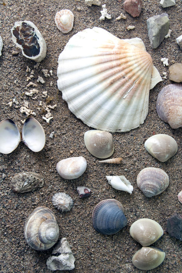 Download Sea life stock photo. Image of outdoors, decoration, sealife - 22559524