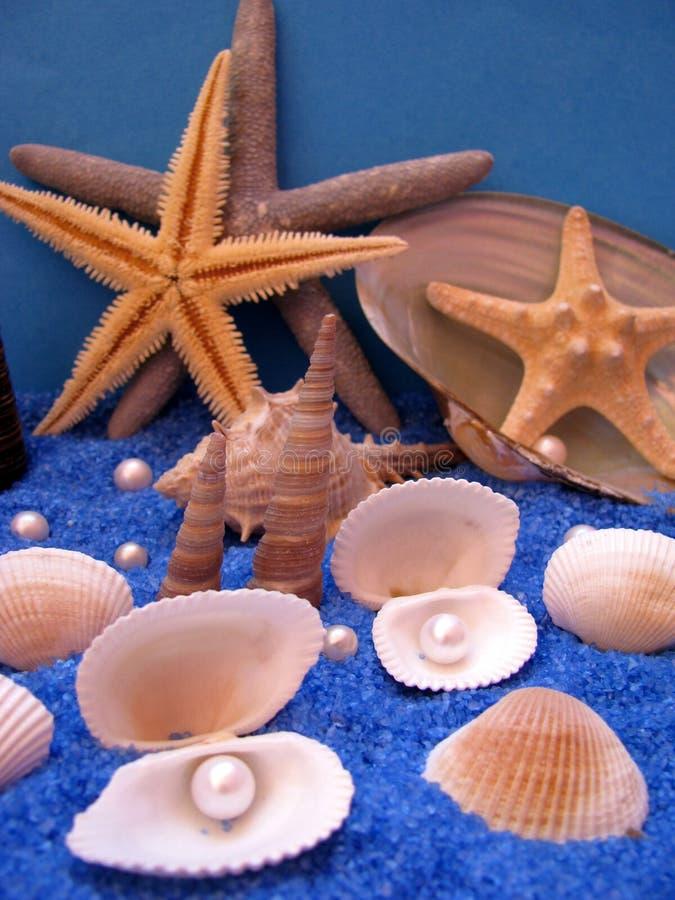 Free Sea Life Royalty Free Stock Photo - 5891085