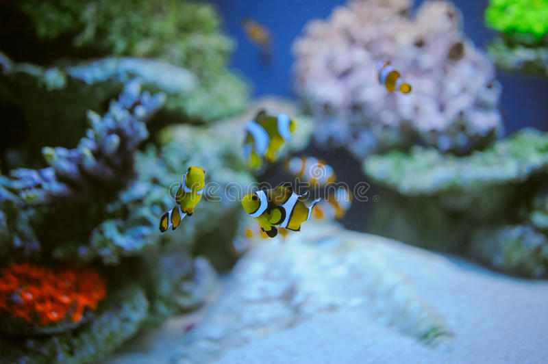 Sea life: exotic tropical coral reef royalty free stock images