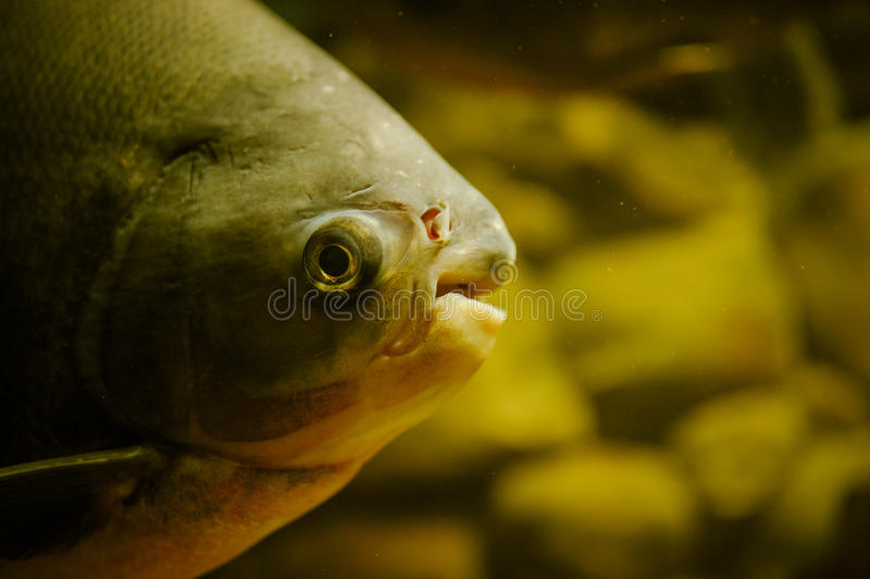 Sea life: exotic tropical coral reef stock image