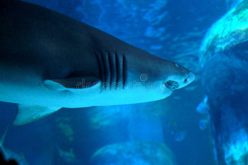 Sea Life London Aquarium. Photo taken during sightseeing at Sea Life London Aquarium in London, England royalty free stock photography