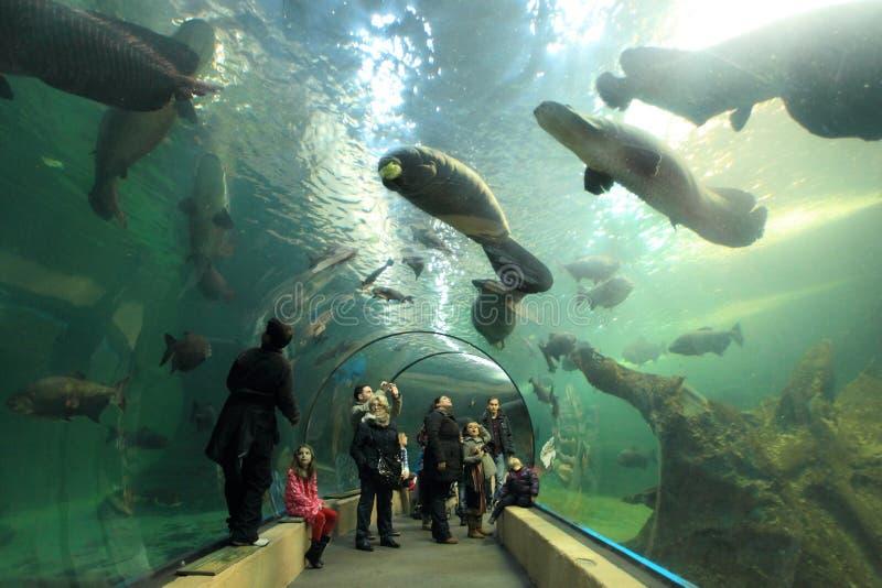 Sea life in Madrid stock photo