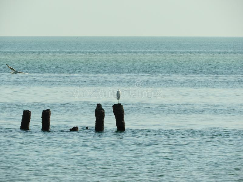 Sea birds and seagulls at the sea sitting on rusted pole. Sea life seagulls and other sea birds are playing on the rusted poles inside the sea, the sea life and stock photography