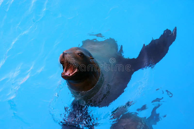 Download Sea Lion stock photo. Image of open, gray, life, peaceful - 1410686