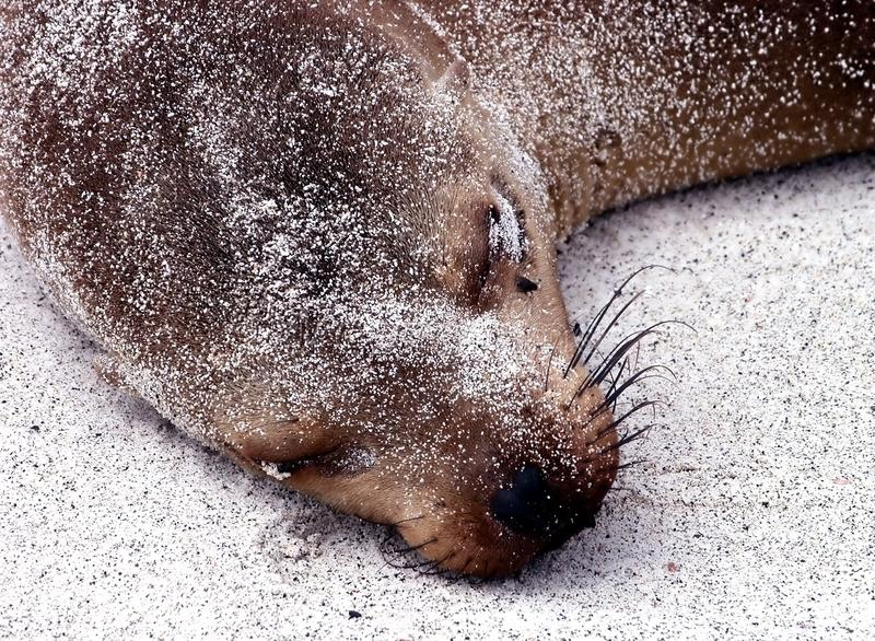 Sea Lion Free Stock Photos