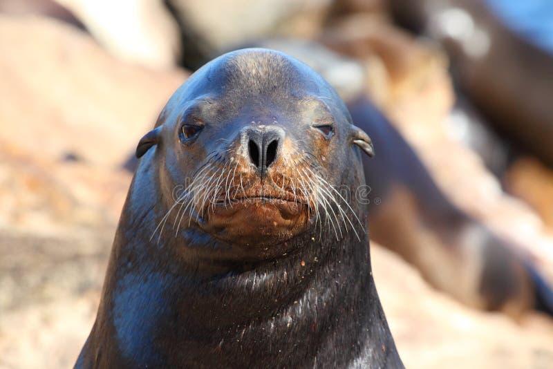 Download Sea Lion stock photo. Image of nature, swimming, mammal - 21327610
