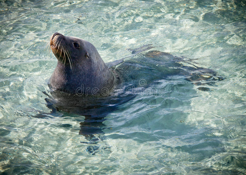 Download Sea Lion stock image. Image of sand, lovable, reserve - 22539911