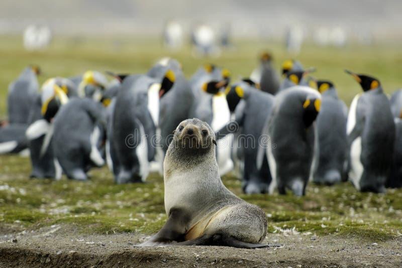 Download Sea Lion stock photo. Image of galapagos, ocean, antarctica - 23555320