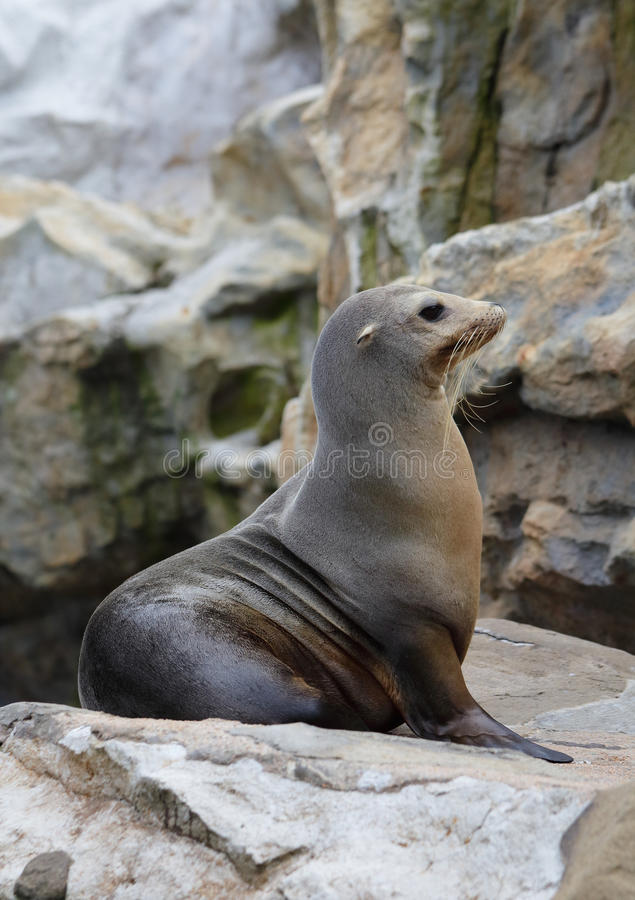 Download Sea Lion stock image. Image of proud, travel, rock, trip - 28352861