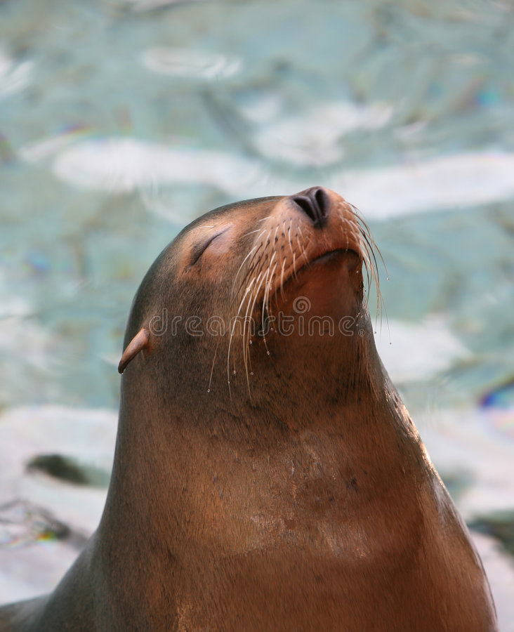 Free Sea Lion Stock Photography - 4029532