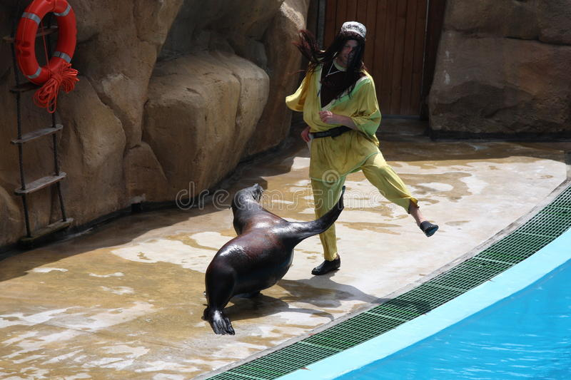 Sea Lion Performing At Zoomarine21-EDITORIAL USE royalty free stock photography