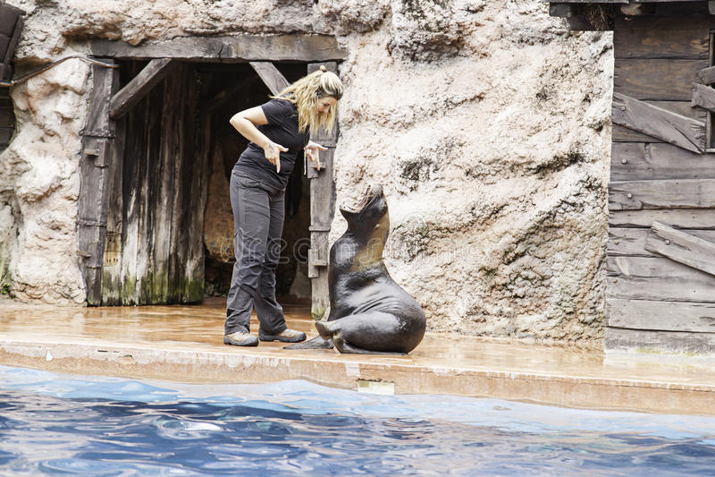 A sea lion show stock images
