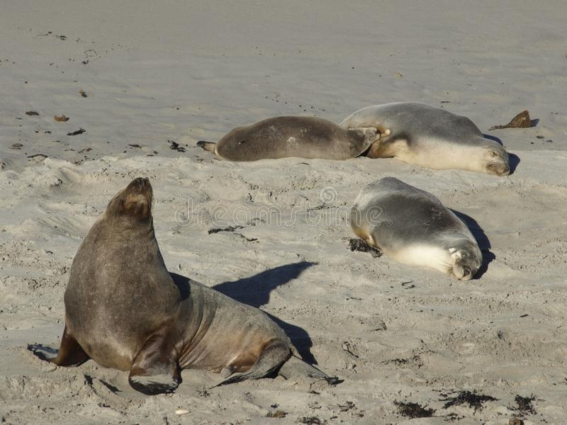 Sea lion beach and sun stock photo