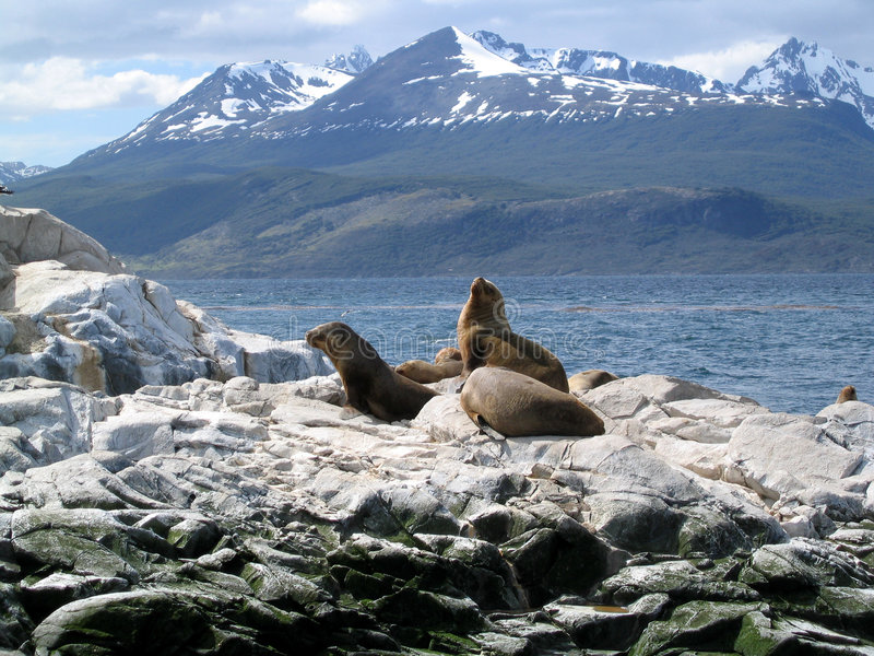 Download Sea Lions Royalty Free Stock Image - Image: 195346