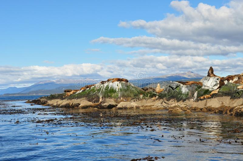 Sea lions on Beagle channel stock photography