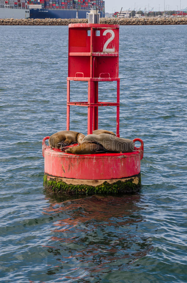 Sea Lions Cuddle on a Red Buoy in Long Beach Habor Vertical. A group of sea lions cuddle while sunbathing in a harbor in California royalty free stock images