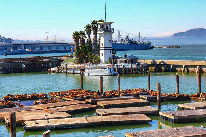 Sea lions at Pier 39 a popular tourist attraction stock images