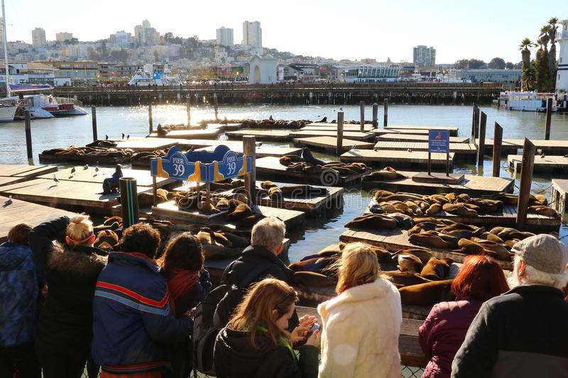 The Sea Lions of Pier 39 in San Francisco stock photo