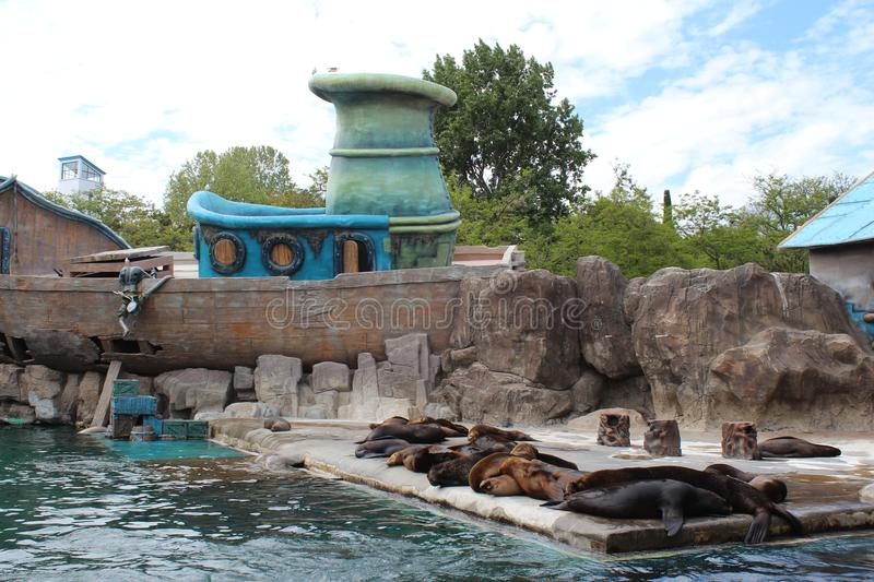 Sea Lions rest in Seaquarium royalty free stock photo