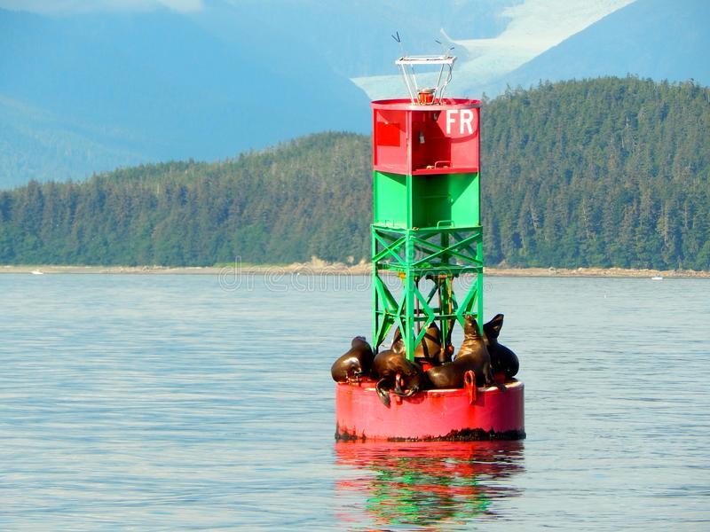 Sea lions resting on an ocean buoy royalty free stock photo