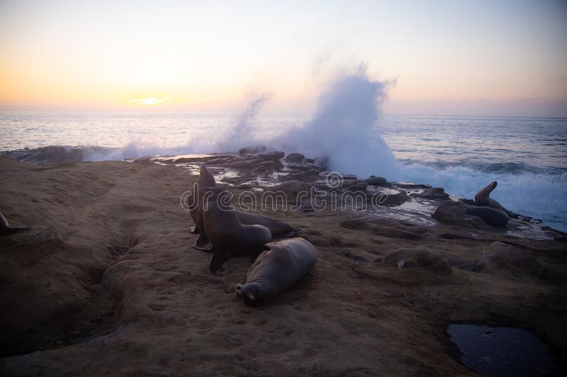 Sea lions resting on the rocks stock image