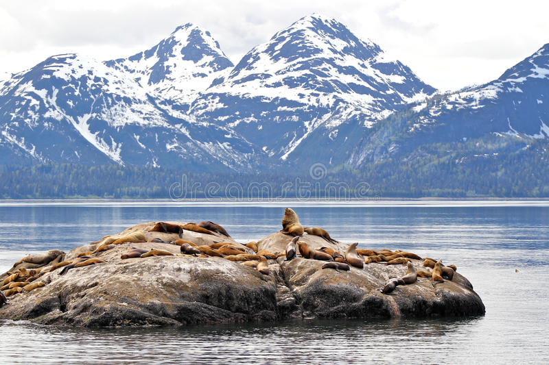 Download Sea Lions On Rock With Mountains Stock Photo - Image: 32378040