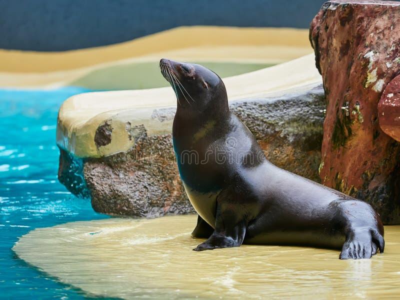 Sea lions show at the Loro Park Loro Parque, Tenerife. Sea lions show at the Loro Park Loro Parque, Tenerife stock photo