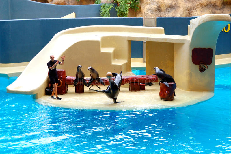 The Sea Lions show in Loro Parque. TENERIFE ISLAND, SPAIN - MAY 26: The Sea Lions show in Loro Parque on May 26, 2011 in Tenerife, Spain. The Loro Parque has 13 stock photography