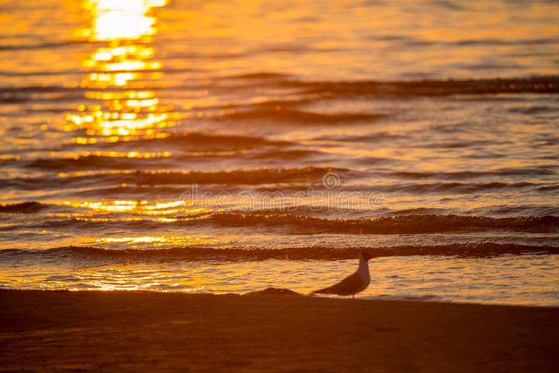 Sea little waves and bird royalty free stock photo