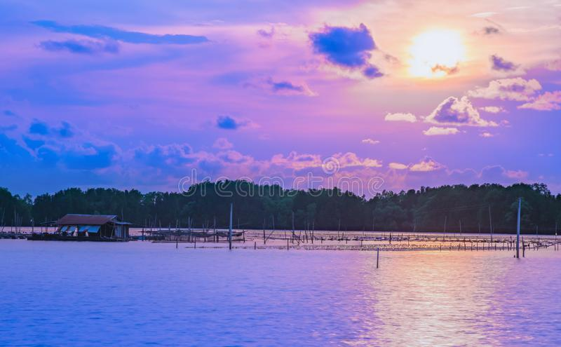 Sea at mangrove forest,evening light at sunset. On blue sky background royalty free stock photography
