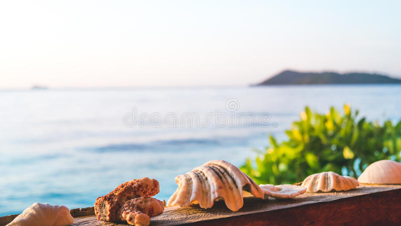 Sea Mussels Shells on Parapet of an Homestay on Gam Island, West Papuan, Raja Ampat, Indonesia.  stock images